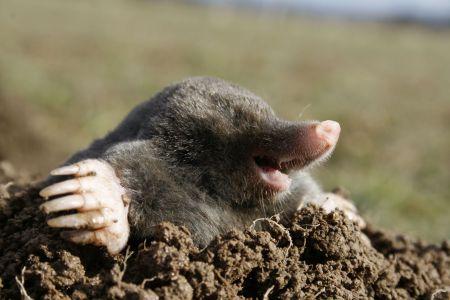 Happy Mole