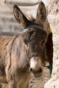 donkeybaby_jillbluemoonbeamstudio1