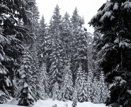 snowy_trees2_sm