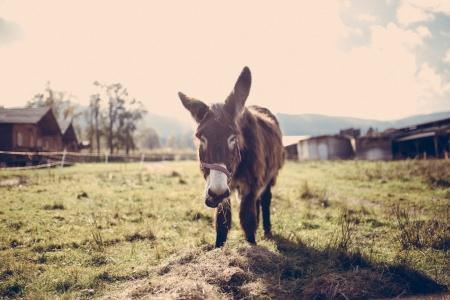 donkeyonfarm