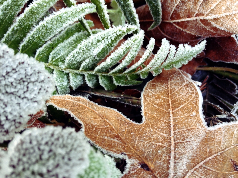 fernfrost2sm