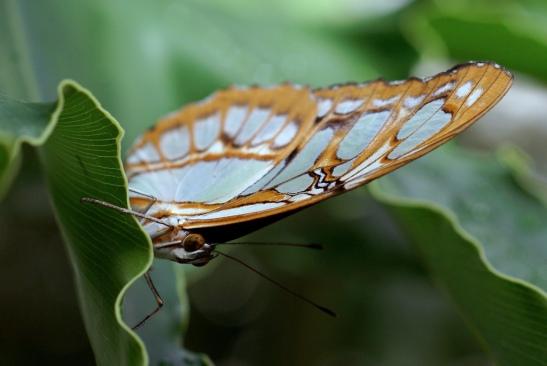 Butterfly by Tim Bocek