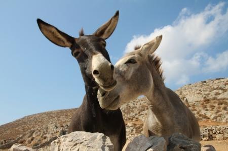 donkeysinlove_klearchoskapoutsis