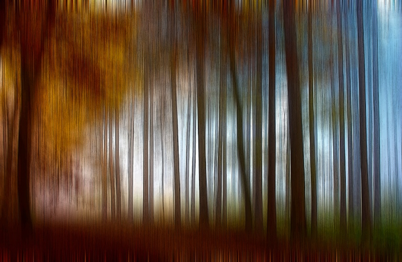abstract_autumn_forest_chiaralily